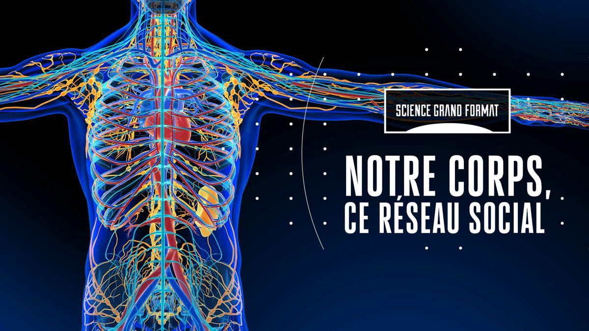Voyage au cœur des conversations secrètes du corps humain...  #Sciencef5 en replay sur @francetv ►