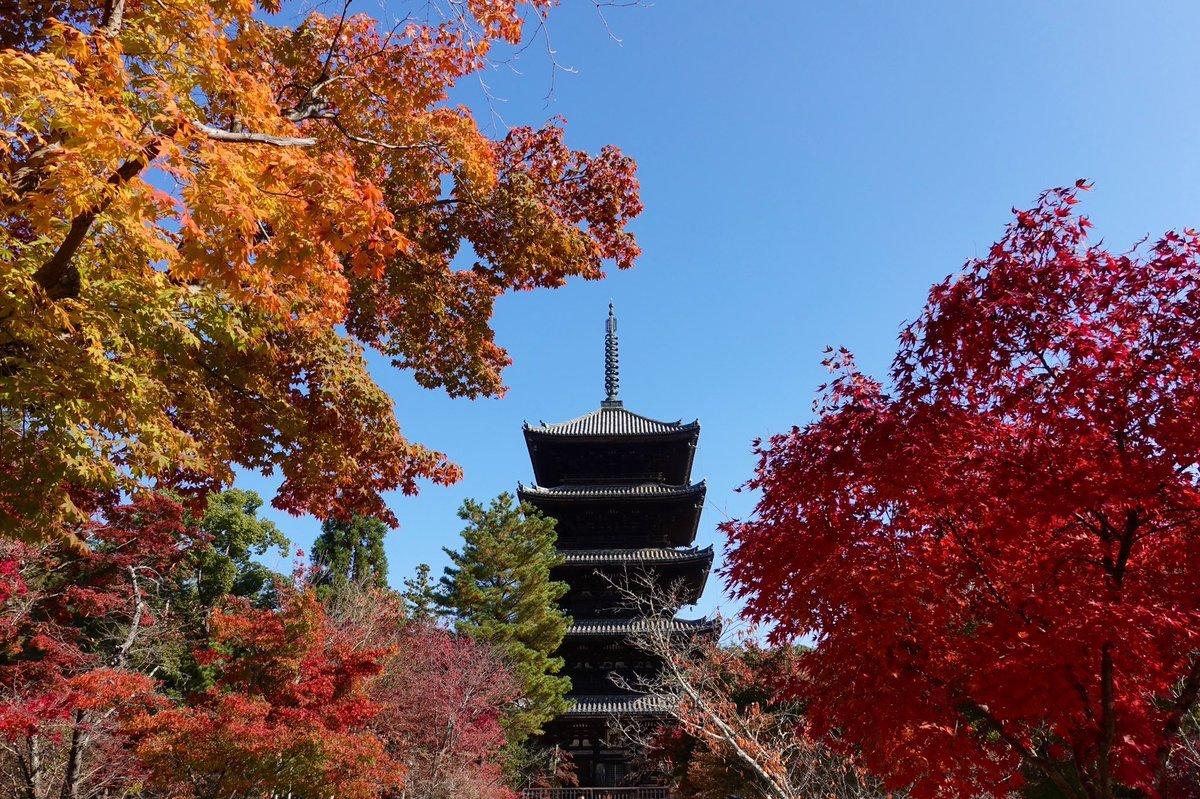 「京の紅葉 御室仁和寺・妙心寺大法院・退蔵院・龍安寺・等持院・平野神社・北野天満宮ライトアップ」11月18日のまとめ嵐電沿線の紅葉はどちらも見ごろになりました。北野天満宮が1番遅いのは例年通りです。仁和寺~等持院はお早めに、北野天満宮は連休明けでも大丈夫です。