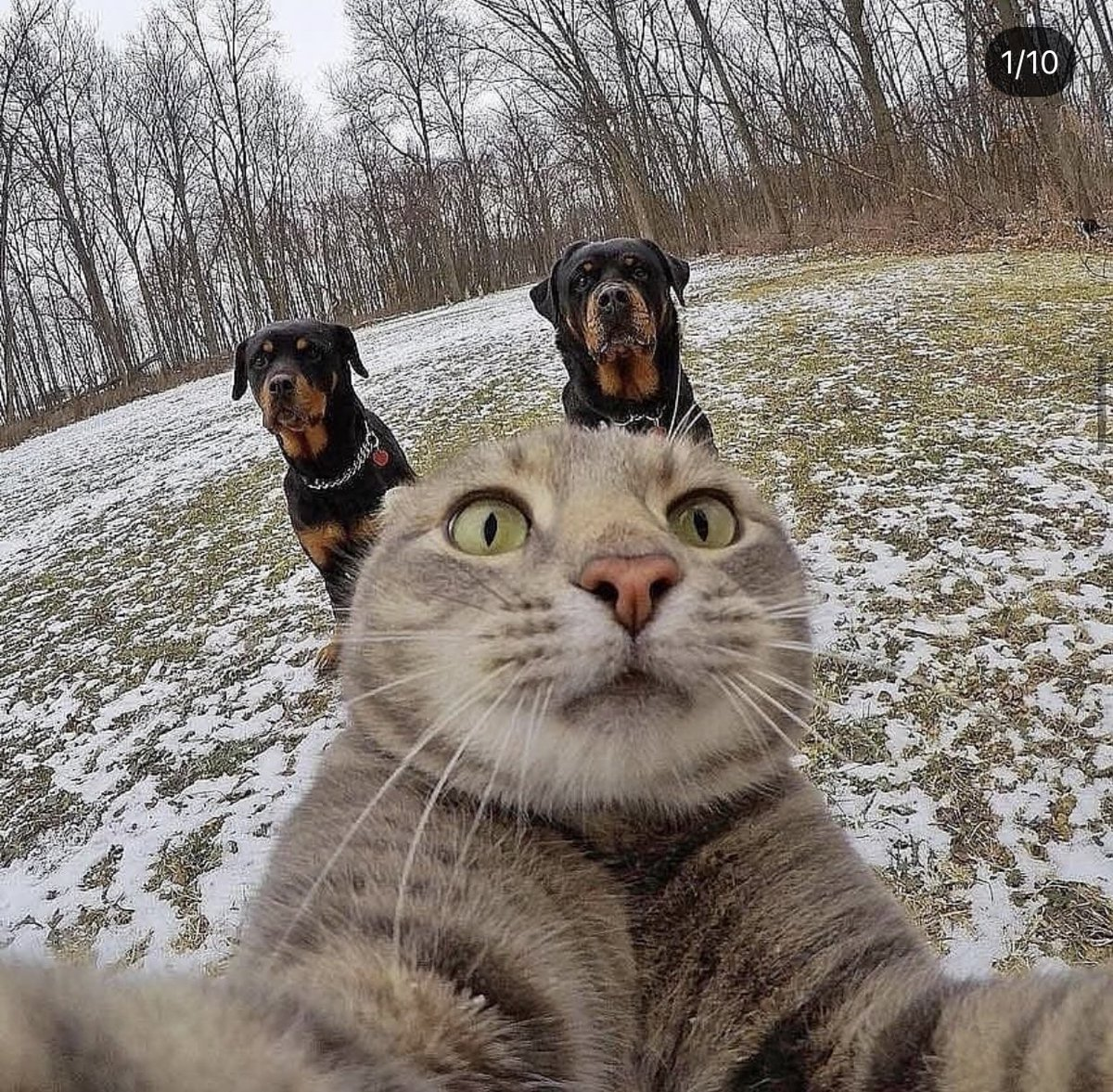 猫の自撮りシリーズほんと好き