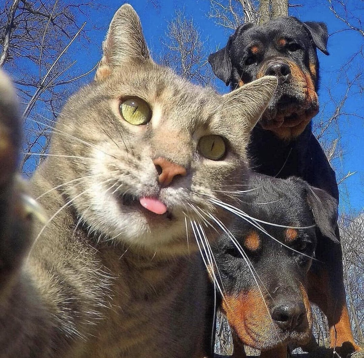 貓的自拍 EnM0RlPXcAcs2PI