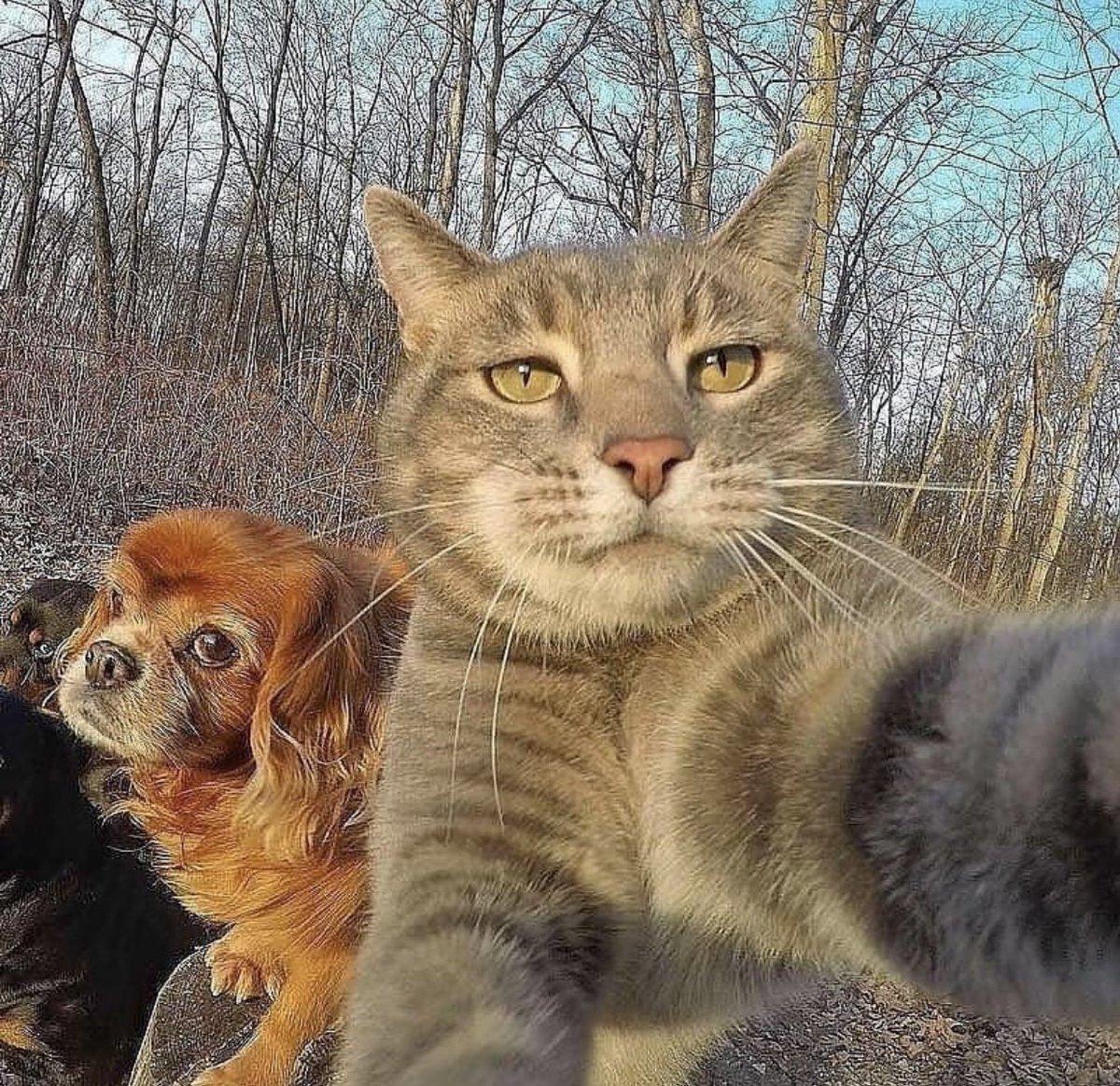 貓的自拍 EnM0RyrXcAIvX89