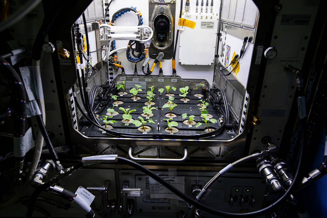 Why did @NASA decide to grow radishes on the @Space_Station? It's a model plant! 🌱✨  1⃣ Both nutritious and edible 2⃣ Has a short cultivation time 3⃣ Genetically similar to Arabidopsis, a plant frequently studied in microgravity  💻: https://t.co/dgG87rGa2E https://t.co/JwBatGQnfv