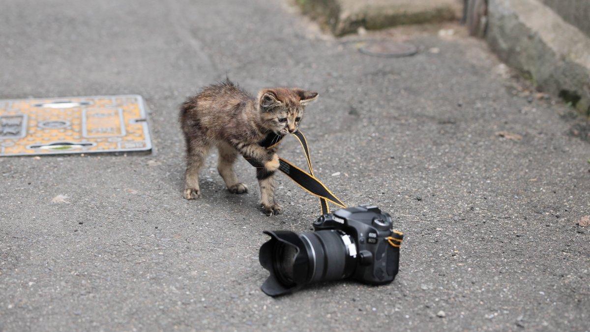 【悲報】ワイのカメラ、引きずられてゆく‥‥