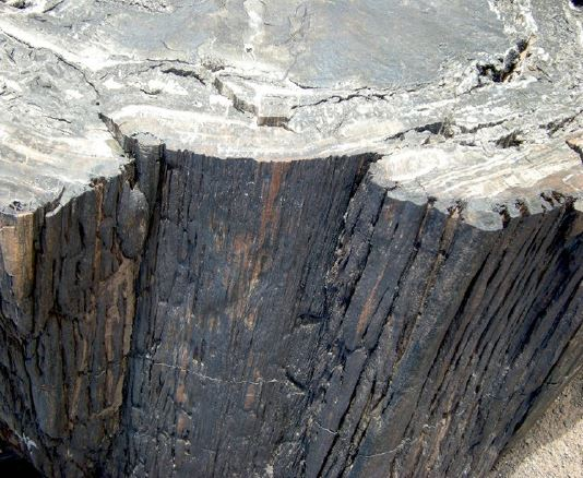 A collaborative research group published yesterday an article documenting several petrified tree trunks at PEFO with preserved fire scars, showing a drought signal in the Triassic wood. Read it here: nature.com/articles/s4159… #parkscience #triassicpark (am)