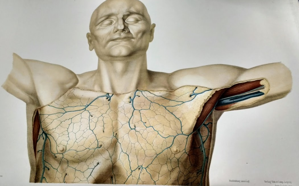 For #HistDay20 were launching a new exhibition. Depicting anatomy: the hunt for unalloyed reality draws together images of some of the most extraordinary, artistic and beautifully accurate anatomy books in @RCSnewss rare books collection. See it at: ow.ly/eOtu50Cp80C