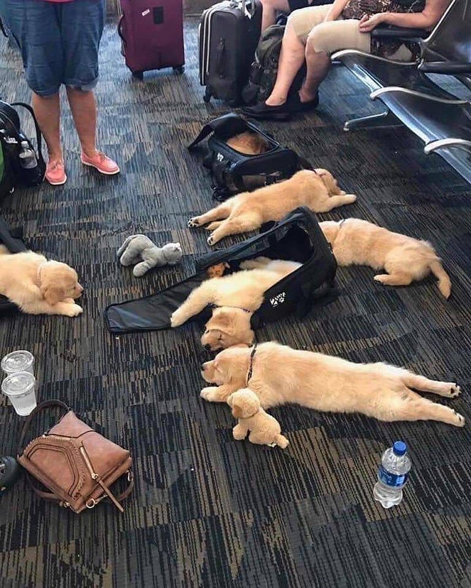 Ok....who spilled the puppers?   (cutest_puppies IG) #cutenessoverload