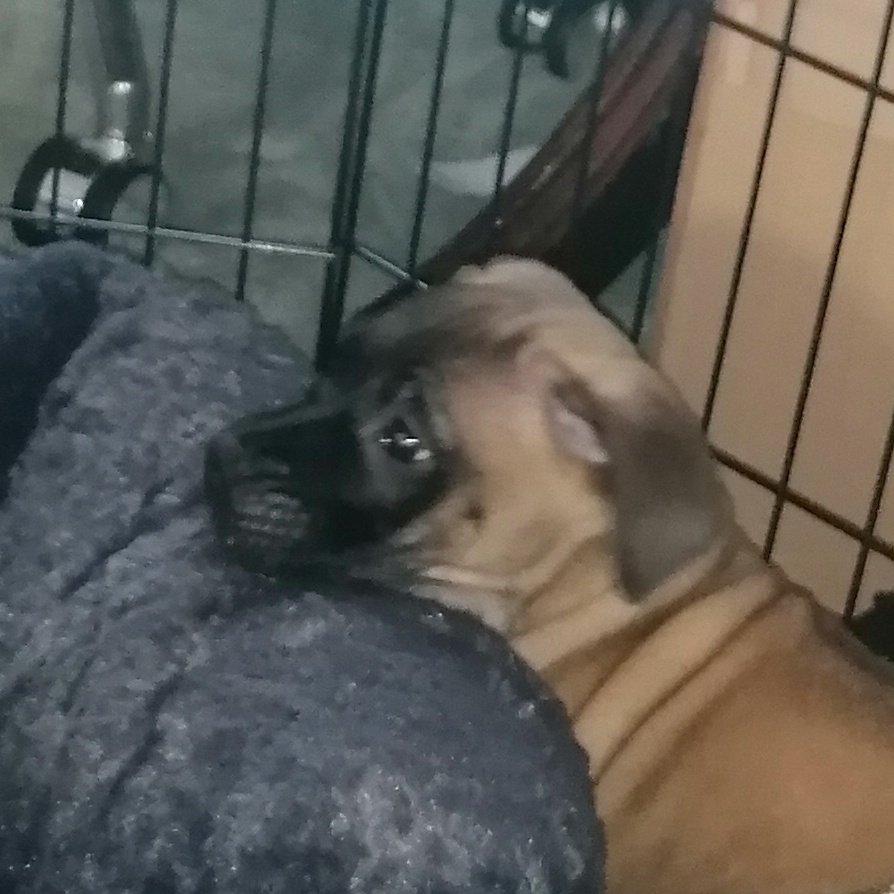 @TheEllenShow Elen say hi to my cute puppy