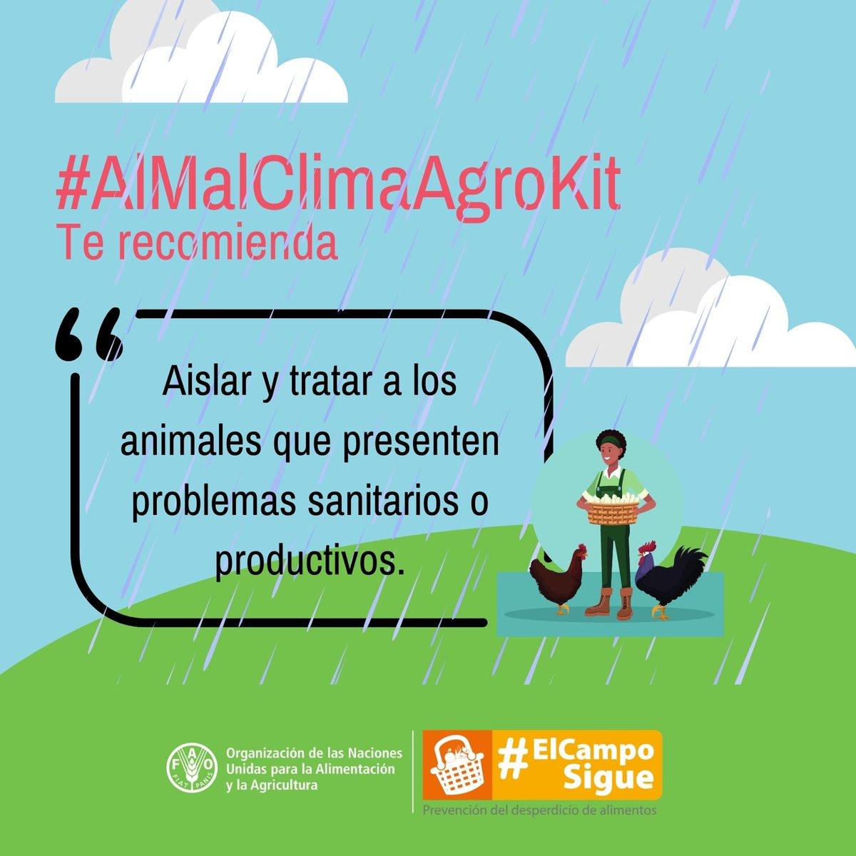#AlMalClimaAgrokit una herramienta digital para el campo📲👨🌾 donde podrá encontrar:   🔎Recomendaciones para el cuidado de los cultivos según el comportamiento del clima  🔎Recomendaciones para la prevención y manejo de riesgos  Más información 📲https://t.co/XiVjvdU233 https://t.co/AKo9n7w43F