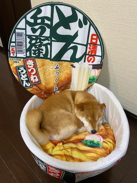 """日清泡麵創作了大型的""""丼""""形寵物床!目前正舉辦抽獎活動送出中! EnQI683UUAEp1ad"""