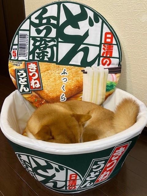 """日清泡麵創作了大型的""""丼""""形寵物床!目前正舉辦抽獎活動送出中! EnQI72QVkAA9pjT"""