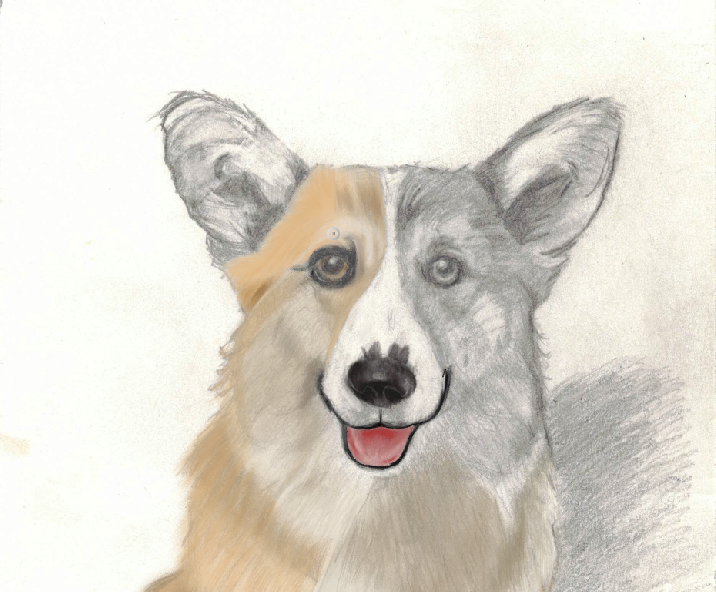 Painted little bit more of the corgi's face of the corgi artwork. Still working on the corgi's face. Have a great weekend. #corgi #corgipainted #animal #animalpainted  #dog #dogpainted #paint #doglover #puppycorgi #art #artwork #artist #corgiartwork #corgilove #artisttofollow