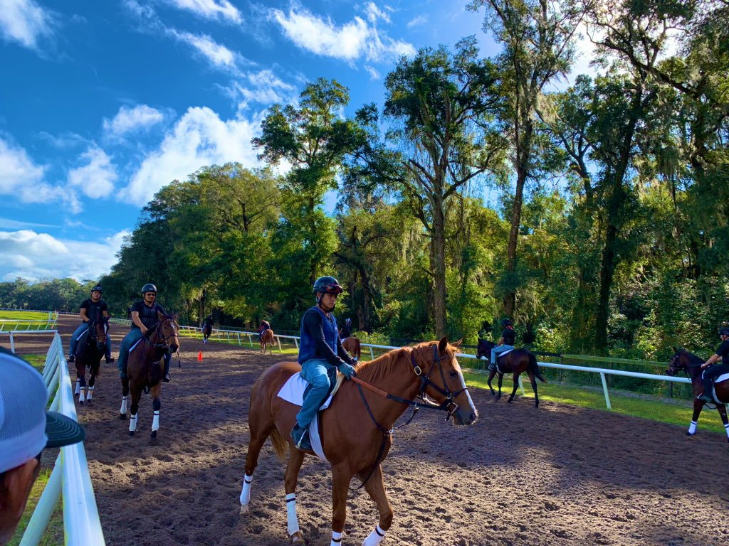 test Twitter Media - Last November @paulmsharp farm in Williston, FL there were two 2020 @BreedersCup winners residing on the farm. Getting our first look at the 2020 crop of yearlings under tack this morning and hoping there are a couple more Champions among the group 🙏🙏 exciting times! https://t.co/sJeCA4l1WP