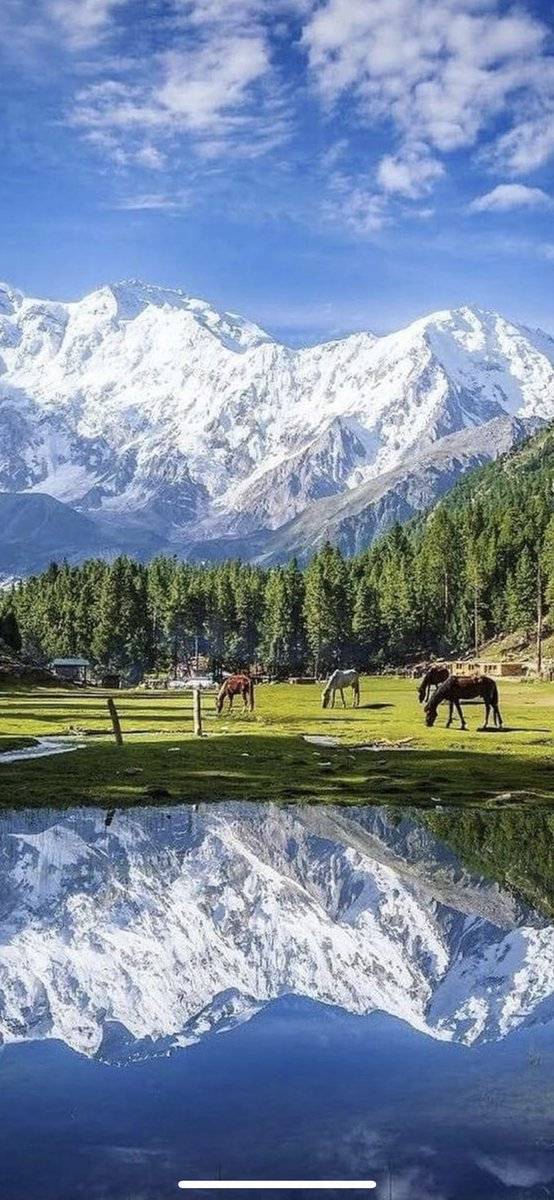 #Fairy #Meadows, named by #German climbers and locally known as #Jaugth, is a grassland near one of the base camp sites of the #Nanga #Parbat, located in Diamer District, Gilgit-Baltistan, Pakistan 🇵🇰 😍😍 https://t.co/V8JIW3OMXL