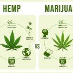 Image for the Tweet beginning: #cannabis #marijuana #weed Governor Northam