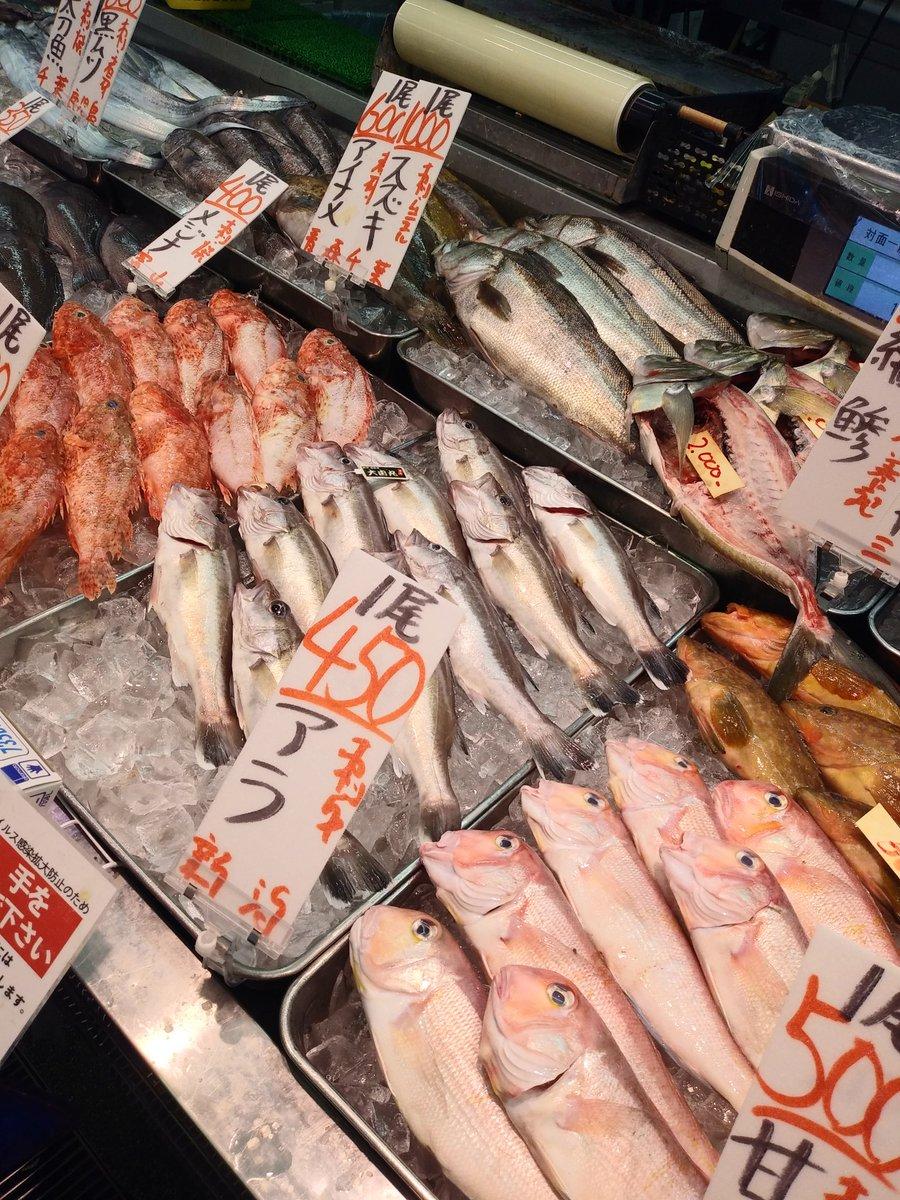 魚類 川口 場 角