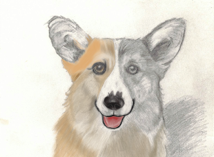 Just started little bit of the corgi's ear on the corgi artwork. It is getting there. Have a great weekend. Good Night. #corgi #corgipainted #animal #animalpainted  #dog #dogpainted #paint #doglover #puppycorgi #art #artwork #artist #corgiartwork #corgilove #artisttofollow