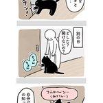 やっぱり猫は自分の可愛さに気づいてる?猫の能力の高さには驚かされる!