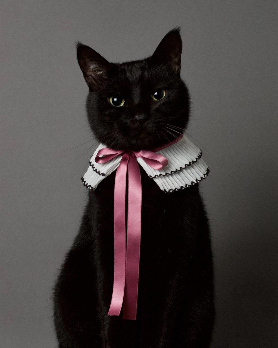 アコーディオンプリーツにモーブピンクのリボンをつけて首輪にしてみました✨🎀🧵✂️くるっと巻くだけで、可愛い襟になりました😊