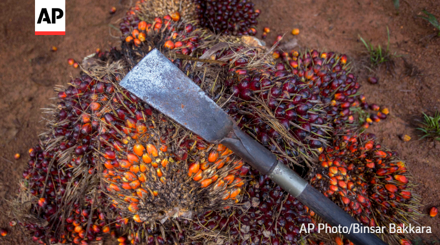 Read more from the @AP's Fruits of Labor investigation of the palm industry. 7/7