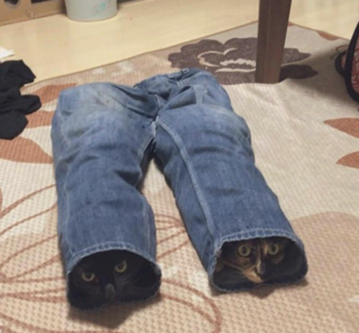 today i offer you two cats in pants