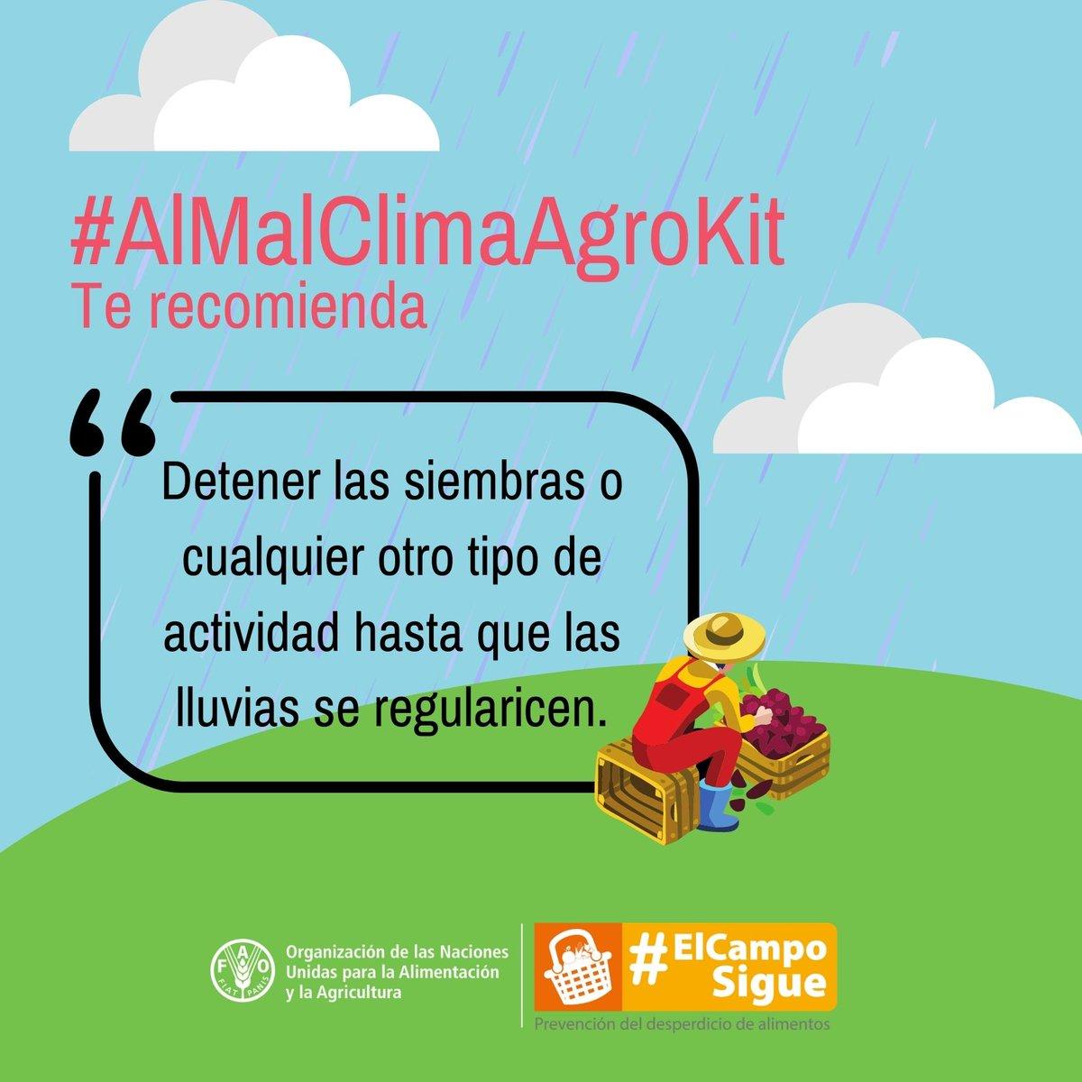 🚨En #TemporadaDeLluvias 🌧️ y para el manejo de los 🌱cultivos llega #AlMalClimaAgrokit para 👩🏾🌾👨🏾🌾productores y profesionales del sector agropecuario, una 📚biblioteca virtual liderada por @MinAgricultura, @FAO 🇨🇴, @AgronetMADR, @UPRAColombia e @IDEAM.  📲https://t.co/XiVjvdU233 https://t.co/uMd78xojqt