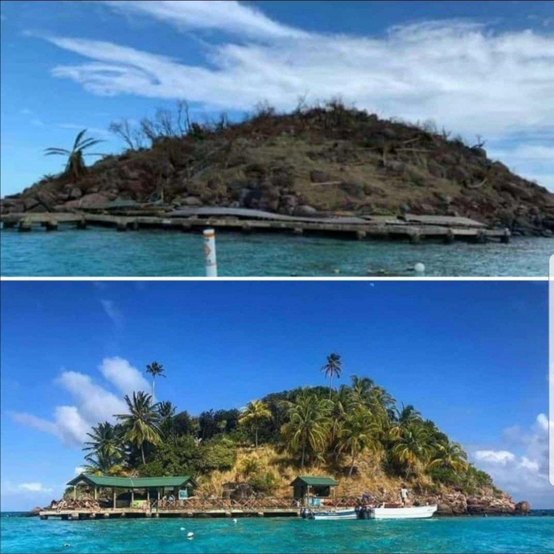 Crab Cay en Providencia. Antes y despues del huracán. Destrucción casi completa de su fauna y flora.