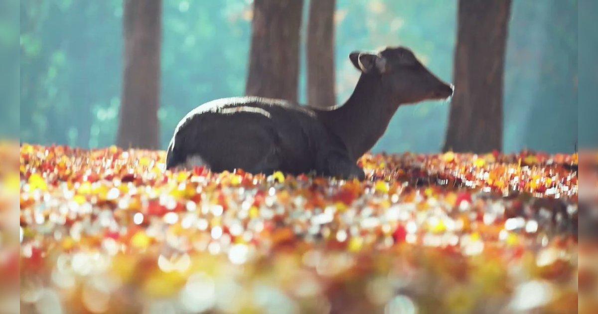 寒い空気のなかの鹿の白い吐息が美しい。心音を聴いてると落ち着くのと同じような効果なのかな、たしかに穏やかな気持ちになってずっと観ていられる。/落ち葉に座ってるだけのシカの映像、でも珍しいモノが見えてるせいでずっと見てられる「視覚的快楽がある」