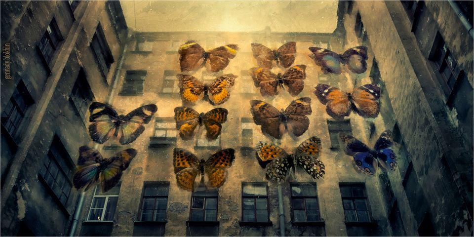 butterflies Gennady Blohin