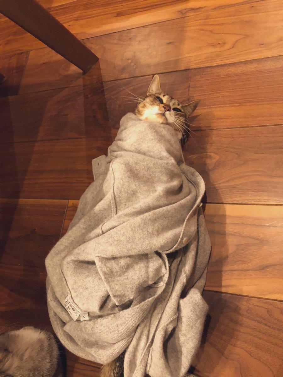 「脱ぎ捨てられた服こそ最高の毛布」
