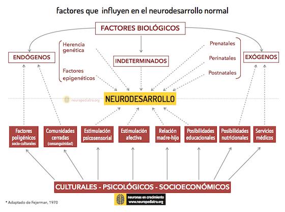 Si el neurodesarrollo normal nos hace irrepetibles, el que discurre con dificultades tiene también como desenlace una persona única.  Ambos son fruto de circunstancias biológicas (genética, semanas de gestación…)y ambientales (apego, cultura, acceso a servicios…). #autismo