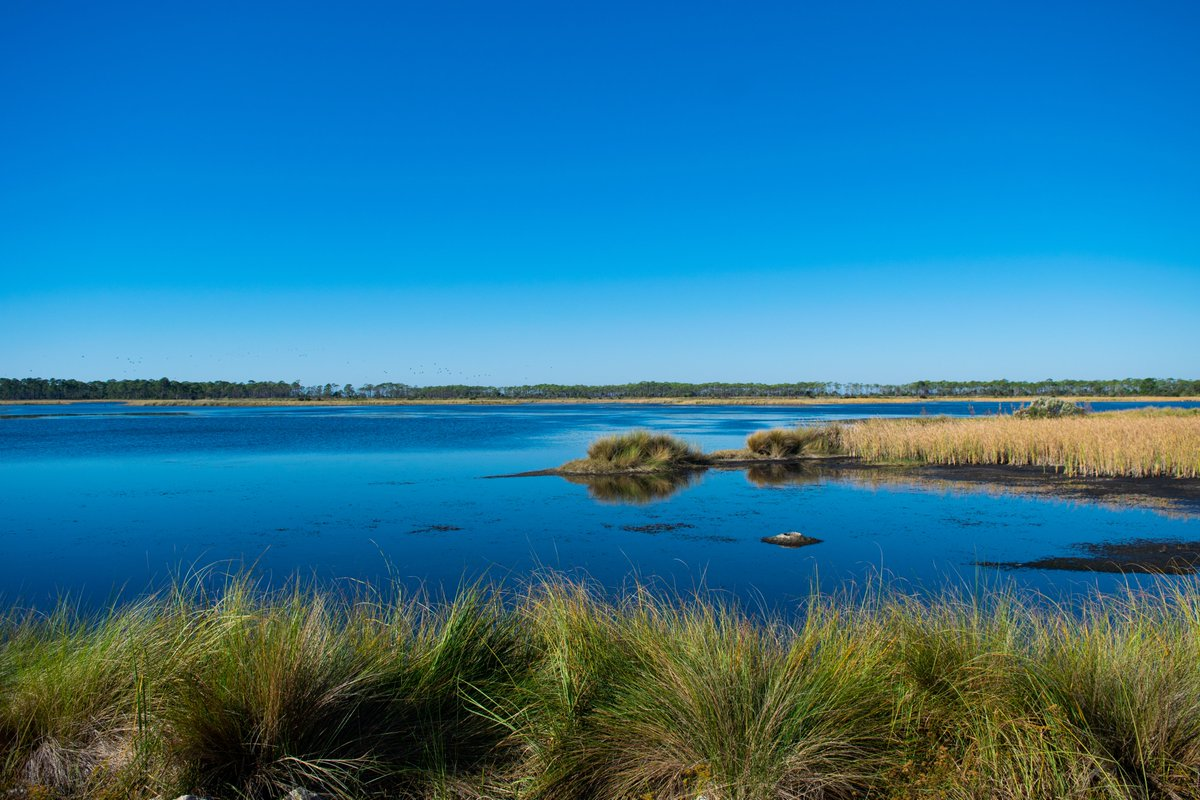 """""""The two of them stood in the middle water, The current slipping away, quick and cold ..."""" --A. E. Stallings  #blue #water #marsh #wildlife #Florida #MotherNature #poetrylovers #poetrycommunity #photography #photo #picoftheday #sundayvibes #mentalhealth #zen #yoga"""