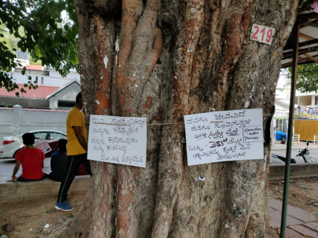 We the peepal: Trio pulls out 600 nails from tree in Bengaluru  via @TOIBengaluru