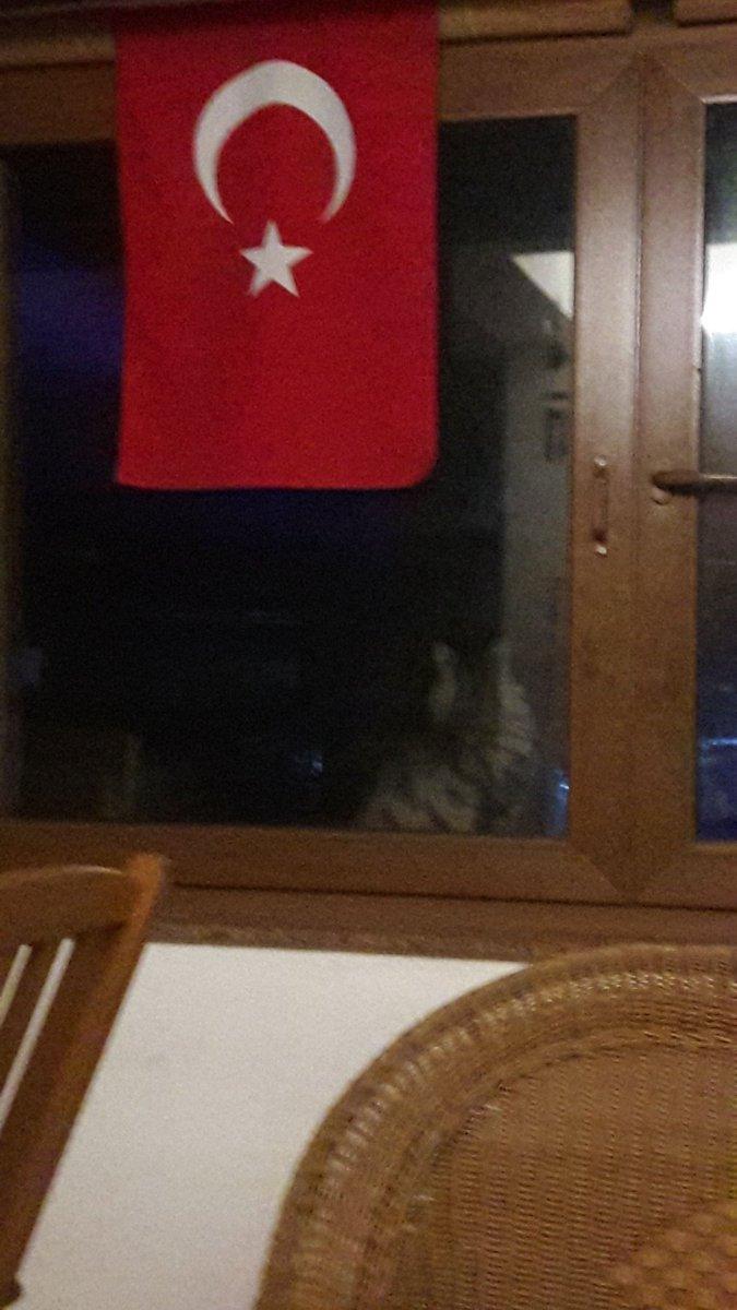 @drfahrettinkoca Sayin Bakanim kedim bahcedeydi simdi geldi 22:05 bu durumda nasıl bir ceza uygulamaliyim kedime sembolikte olsa diğer kedilerimde korksunda geç kalmasinlar...Kurallara uysunlar Bayrak #29Ekım ve #10Kasım amaçliydi merak edenlere #EvdeKalTürkiye