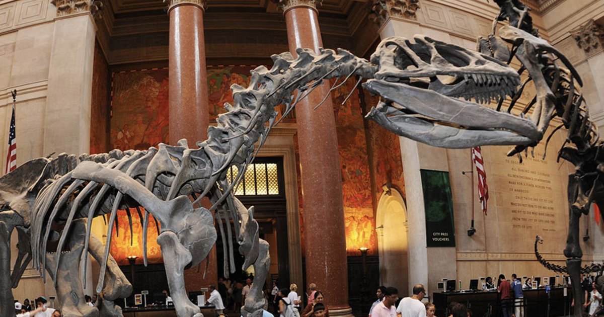 Rex: Museum of Natural History docent