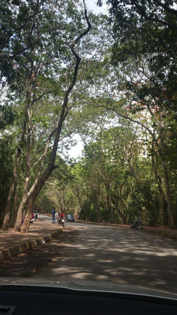 #trees #forest #nature #GreenIndiaChallenge