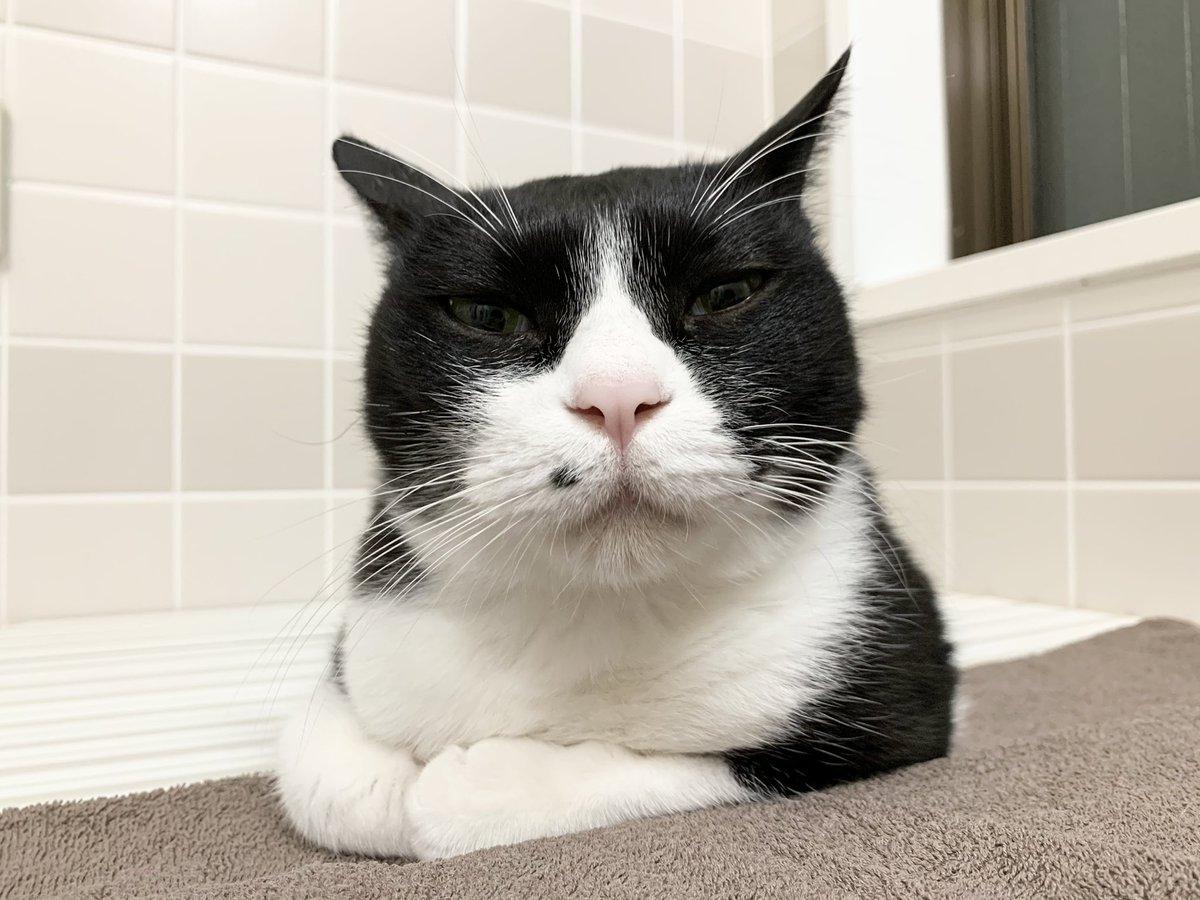 一緒に風呂に入る時の猫、いつも「なんでも知ってるからなんでも質問してみて」みたいな顔してる