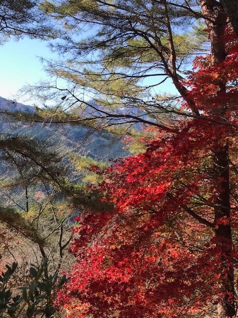 『秋の紅葉メモリアル☆遅くなりましたが、紅葉を見ることが出来ました(*´▽`*)!♪』⇒  #アメブロ @ameba_officialより