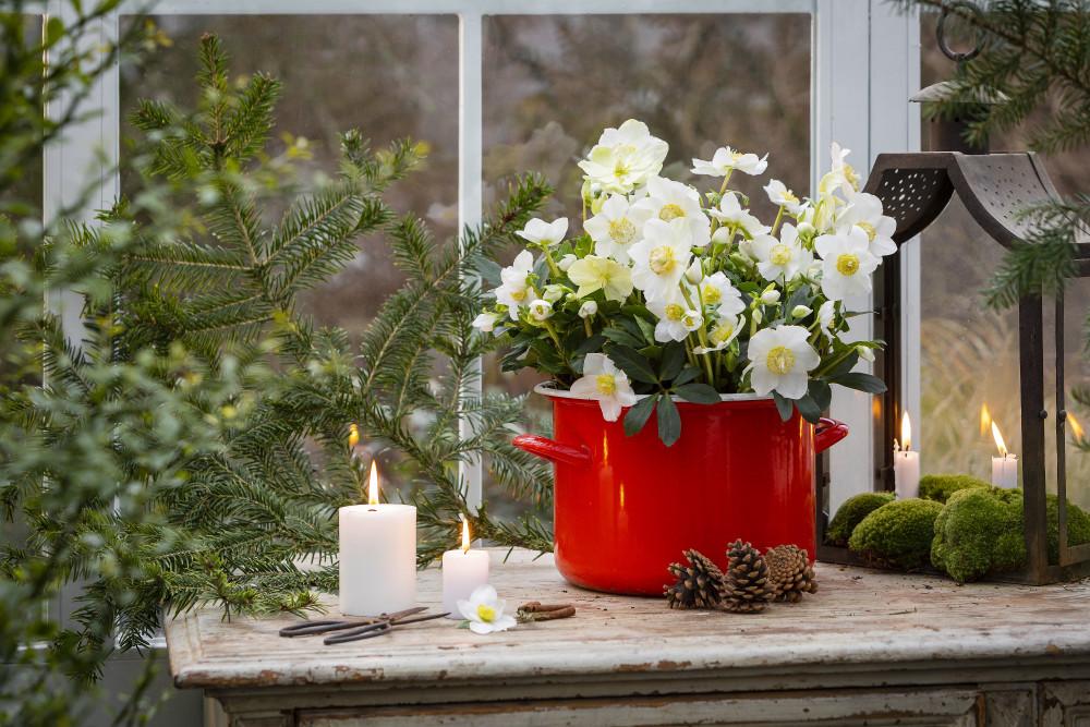 Svenskodlad julros – vackraste växten för entrén! https://t.co/ndzQo18DM5 https://t.co/UBYcI5BPTW