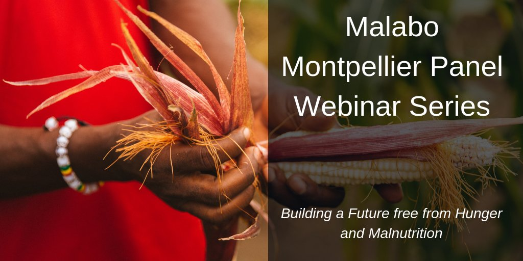 test Twitter Media - Join @MamoPanel Webinar: Innovative agri-tech and mechanization policies for food system transformation, today from 13:30 to 15:00 PM GMT! https://t.co/napil4VoOw https://t.co/YUE4lHPWdZ