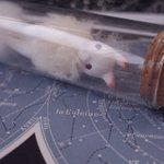 Image for the Tweet beginning: 「Fly me to the moon」 「月の石」(7点) この2作品についてはお迎え当日お持ち帰りいただけます どうぞよろしくお願いいたします👜🌝
