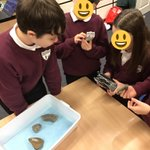Image for the Tweet beginning: Year 6 were fascinated by