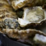 Image for the Tweet beginning: In 2018, Scotland's shellfish (mussels,