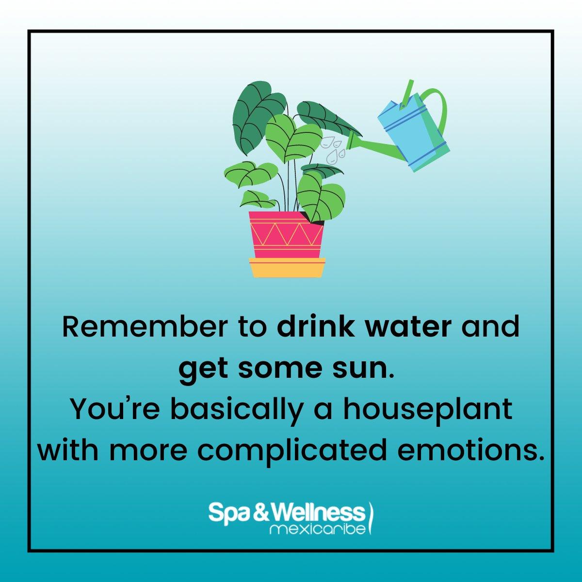 Recuerda beber agua y tomar sol. Básicamente eres una planta con emociones más complicadas  #spa #wellness #bienestar #mondaymotivation #mondaymood #mondayvibes #mondaymorning #mindfulness #mondaymindfulness #mondayquote   Read #SpaWellnessMexiCaribe