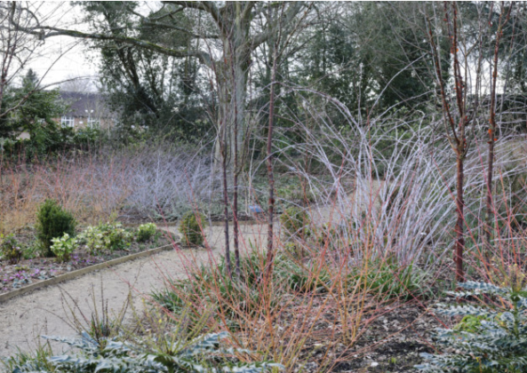 Read about the beautiful garden at Mottisfont Abbey in winter.      #gardening #garden #tuesdaymotivation