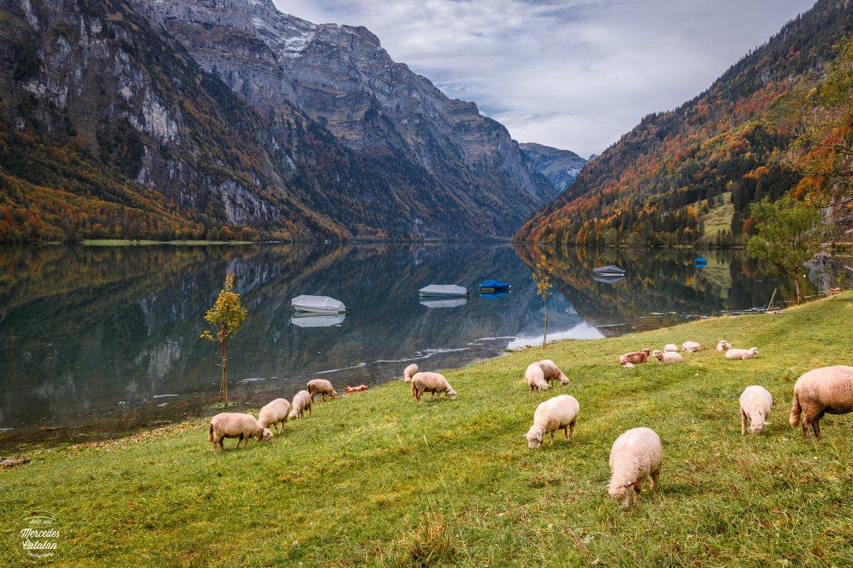 Autumn in Klöntalersee    #lake #landscape #autumn #nature #glarus #glarnerland #swissalps #switzerland #inlovewithswitzerland #photography #travelphotography #macrophotography #thephotohour #pintofotografia #canon #lifeforthestory #eos5dMarkIV