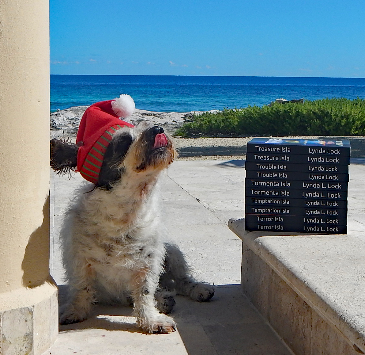 @syd_akaYog Gud mornin' hoomans and fur-babies. Will youse follows us back? Woof! Woof! Sparky, hero of the Isla Mujeres Mystery novels. #rescueismyfavouritebreed #dogsoftwitter #readerswanted #writerslift #mondaythoughts #mystery