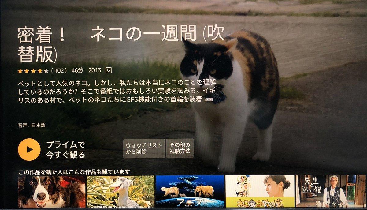 今まで有料だった『密着!ネコの一週間』がアマプラに無料になっていました。ある街の飼い猫50匹にGPSやカメラを装着して24時間体制で一週間密着し続けるドキュメンタリーで、実は知らない家猫達の普段の生活が見られてとても面白かったです。猫好きにはマジでオススメ。吹替え版で見やすいですよ。