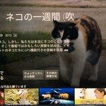 猫好きなら見なきゃ損!?アマプラで猫の一週間に密着したドキュメンタリーがある!