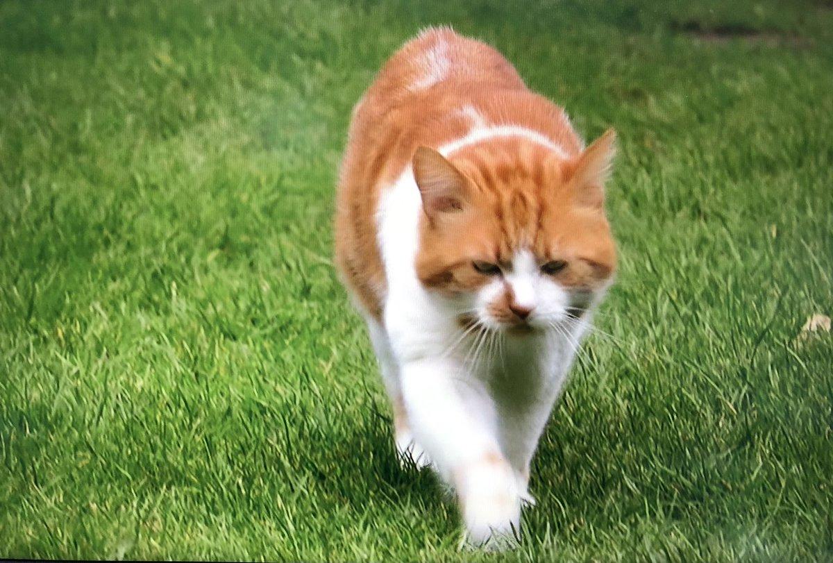 """亞馬遜影片上線了一個24小時跟踪50隻野貓行動,名為""""貓的一周""""的紀錄片,讓你看看那些野貓的日常生活! EnhilfwVoAA-WBg"""