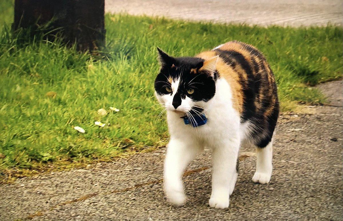 """亞馬遜影片上線了一個24小時跟踪50隻野貓行動,名為""""貓的一周""""的紀錄片,讓你看看那些野貓的日常生活! EnhiljXVQAApeFO"""